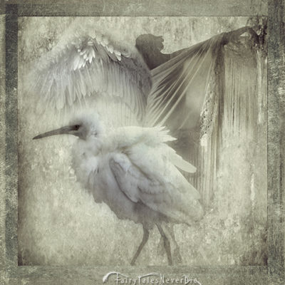"White feathers blend in the whitish foggy morning_Table 11 from the ""ADAGIO - A Winter's tale"" by FairyTalesNeverDie"