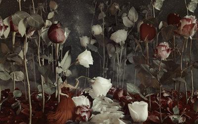 Portami delle Rose… ne farò una Variazione!
